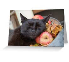 black cat on old barrel Greeting Card