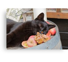 black cat on old barrel Canvas Print