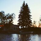 Lake Light by ALICIABOCK