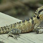 Water Dragon Poser by Penny Smith