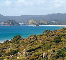 New Zealand landscape 11 by sabrina card