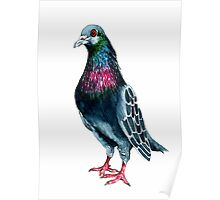 Seymour the pigeon Poster