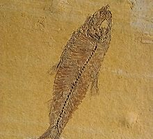 Fish Fossil by Chris Thaxter