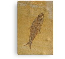 Fish Fossil Canvas Print