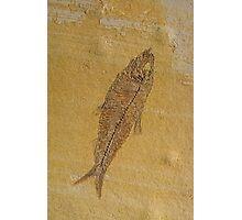 Fish Fossil Photographic Print