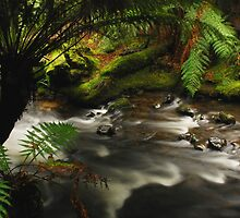 The Rainforest Mount Field National Park by Imi Koetz