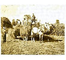 Eight-year old Jack driving load of hay ( Rural Child Labor, August, 1915 ) Massachusetts, USA Photographic Print