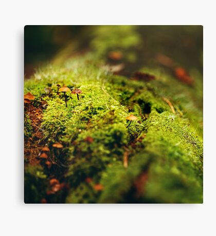 Moss Close Up View with Little Mushrooms Canvas Print