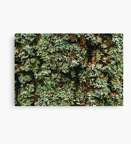 Nature Background Canvas Print