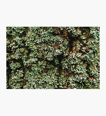 Nature Background Photographic Print