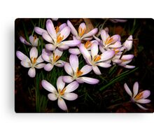 Spring is here! Canvas Print