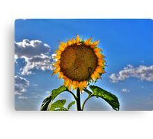 Floral Sunshine Canvas Print
