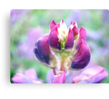Purple Lupin Top Canvas Print