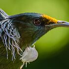 Tui by robertperry