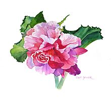 A Summer's Begonia Photographic Print