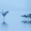 Dancing in the morning light by James Godber