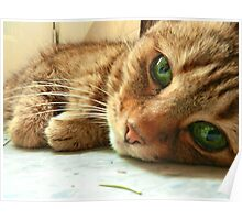 Green Eyed Kitty Poster