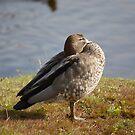 Zen duck by Nicola Schultz