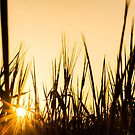 Barley Silhouette by Candice84