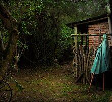 Silent Dog, Still Leaves by Ted Byrne