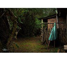 Silent Dog, Still Leaves Photographic Print