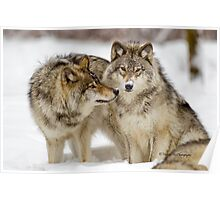 Love you sweetie... - Timber Wolves Poster