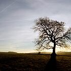 A Favourite Oak by mikebov