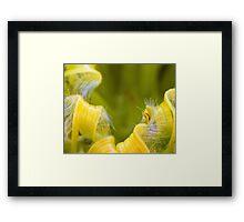 Colourful Flowers Framed Print