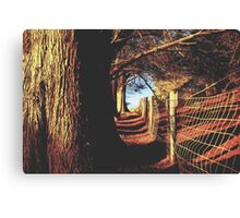 trees in the forest with shadow and sunlight Canvas Print
