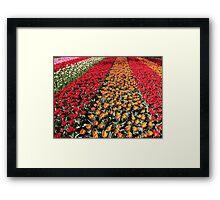 Tulips in Line Framed Print