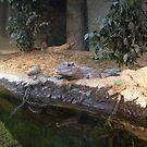 Lazy Crocodile by SUZYQ56