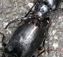 Black Beetles Sticker