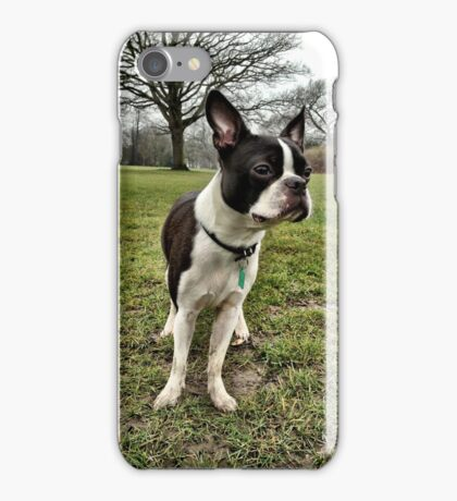 Portrait of Meryl the Boston Terrier II iPhone Case/Skin
