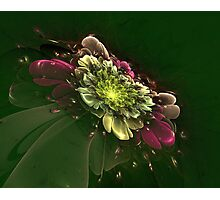Interesting intriguing abstract background in the form of a stylized flower Photographic Print