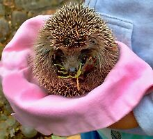Tiny Hedgehog In A Hat  by Rick  Todaro