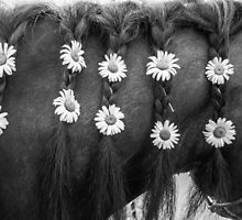 Daisies & Braids by SD 2010 Photography & Equine Art Creations