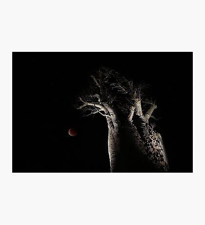 The Blood Moon And The Boab Tree Photographic Print