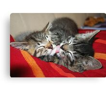 Kittens Sleeping Cuties Canvas Print