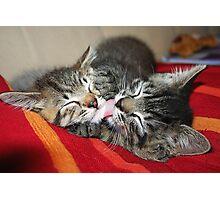 Kittens Sleeping Cuties Photographic Print