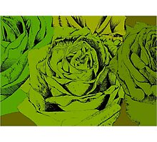 roses green Photographic Print