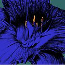 daylily blue by andley