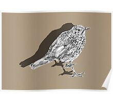 songthrush shadow Poster