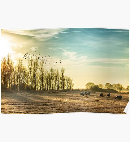 Stunning frosty and misty rural morning with a flock of sheep Poster
