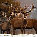 Family Portrait - Red Deer by George Wheelhouse
