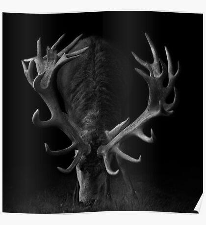 Deer on Black Poster