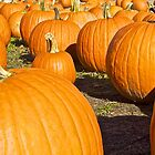 Pumpkins on Parade by John Butler