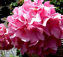 flowers pink hydrangeas by Maureen Zaharie
