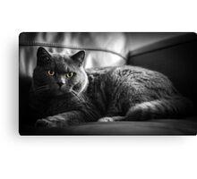 cuddly cat  Canvas Print