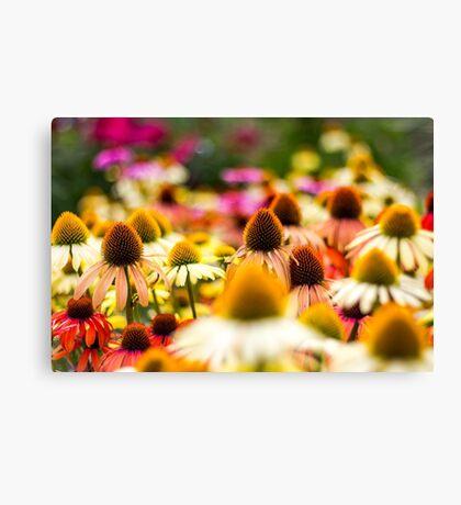 Sea of echinacea Canvas Print