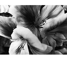 Geranium Mish Mash Photographic Print